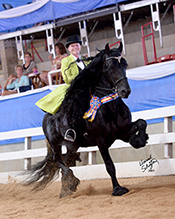 2016 Horse Stars Hall of Fame Inductee Dash Rip Rock