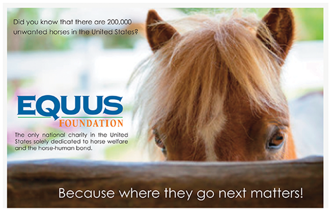 Did you know that there are 200,000 unwanted horses in the US?