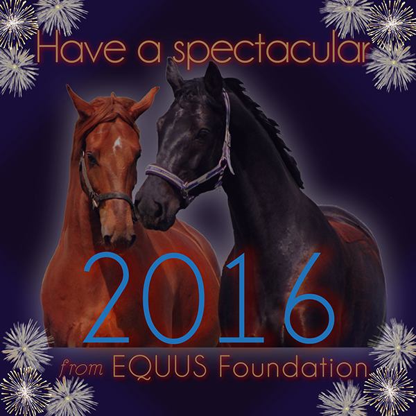 Happy New Year from EQUUS Foundation!