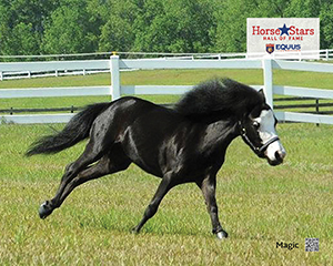 2015 Horse Stars Hall of Fame Inductee Magic