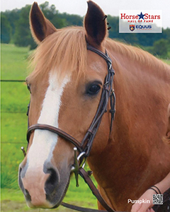 2015 Horse Stars Hall of Fame Inductee Pumpkin