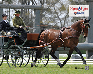 2015 Horse Stars Hall of Fame Inductee Uminco