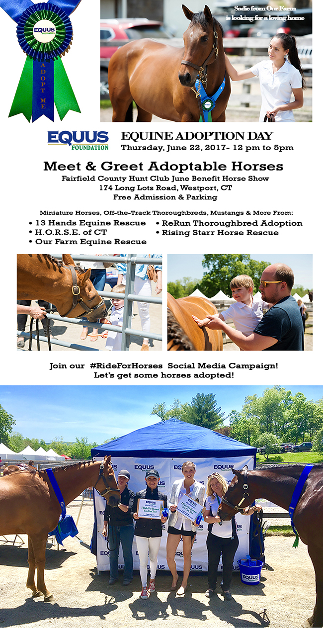 Equine Adoption Day at Fairfield