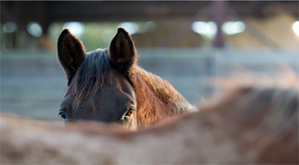 EQUUS Foundation Awards Over $500,000 in Grants in 2020