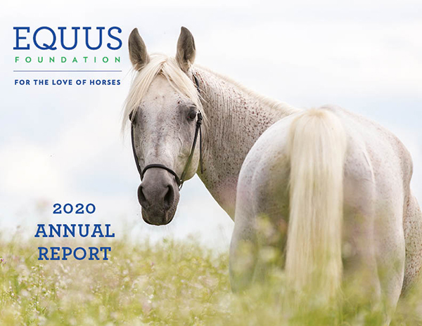 Harsh Realities & Boundless Opportunities: 2020 in Review